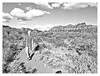 GB_20170305_0024 (Guido Balduzzi) Tags: argentina arid cielo clouds flora guidobalduzzi hombre man nationalpark naturaleza nature nubes parquenacionalsierradelasquijadas sanluis sky vegetación vegetation wild wildness árido
