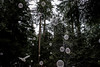Forest Whimsy (Alison Claire~) Tags: capilano vancouver canada suspension bridge park forest trees tree pine brown nature outdoors outdoor nautre north van british columbia bc alison lonsdale canon canoneos canoneos600d eos600d eos rebel rebelt3i rebelt31