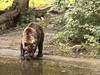 Bruine beer (ericderedelijkheid) Tags: ouwehandsdierenpark rhenen dierentuin zoo netherlands