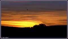 """ Flight of the Morning Dove "" ("" P@tH Im@ges "") Tags: sunrise dawn dove morning fields flight wing light sky dorset england panasonicfz200 unprocessed handheldshot puncknowle 0548sept24th2016 hoyavariable52mmndfilter day golden"