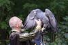 2017-08-06 17-41-43 _K1_8399ak (ossy59) Tags: k1 pentax oberursel oberurselerfeyerey dfa hdpentaxdfa28105mmf3556eddcwr 28105 blaubussard blauadler blackchestedbuzzarseagle adler eagle aguila aguja aguilaescudada geranoaetusmelanoleucus kordillerenadler