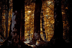 yellow light (sopo_chinchaladze) Tags: trees canon light sun sunlight travel forest nature ngc