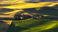 good morning, Palouse! (aidong_ning) Tags: palouse wheat wheatland sun washington steptoebutte field farm morning sunrise light