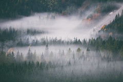 two feet in the forest (STEPtheWOLF) Tags: forest feet woods fog morning fall silhuettes contrast trees tips vintage classic austria styria bodenbauer canon 5d3 300mm