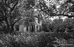 The Pump House (/ shadows and light) Tags: manitoba nearsnowflake pumphouse demolishedsince abandoned building trees tallgrass vegetation decay decayed bw monochrome trixgrainold ruralexploration rurex torndown