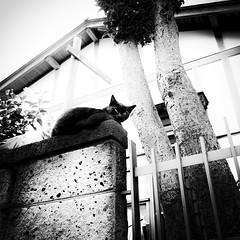 cat (s_inagaki) Tags: cat nap snap street monochrome blackandwhite bw tokyo japan