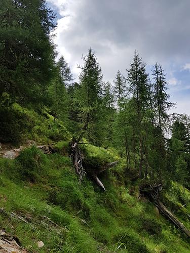 Waldbaden im Aletschwald