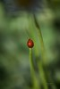 Insecto (Carlos Santos - Alapraia) Tags: ngc ourplanet animalplanet canon nature natureza wonderfulworld highqualityanimals unlimitedphotos insecto bug