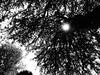 DSC00281 (omirou56) Tags: 43ratio sonydscwx500 blackwhite blackandwhite bw monochromo ασπρομαυρο ασπρομαυρη μονοχρωμη ελλαδα ελλασ ευρωπη εξοχη δεντρο σιλουετεσ silhouette tree nature natur natura greece hellas outdoor noiretblanc