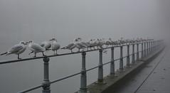 Rive droite... . (jean-paul Falempin) Tags: brouillard quai brume
