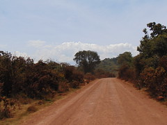 DSC00279 (francy_lioness) Tags: safari jeep animals animali ippopotami leone savana gnu elefante iena pumba tanzaniasafari ngorongorocratere gazzella antilope leonessa lioness facocero