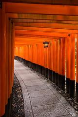 Red toriis at Fushimi Inari-taisha (mzagerp) Tags: japon japan honshu temples bouddhism asie asia july august 2017 travel voyage roadtrip inari inarijinja shrine torri portes rouge
