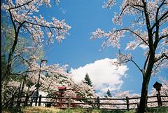 FInd14-Fuji (hhnguyen88) Tags: konicahexaraf analog 35mmfilm filmphotography fujicolorindustrial100