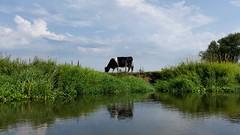 2017-08-12 14.50.33 (barbiez) Tags: jarnice dolinaliwca ostojanadliwiecka podlasie podlachia mazowsze mazovia poland węgrów liw countryside country liwiec