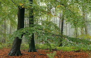 Regennasser Wald