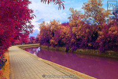Infrared photography, Torcello (Pedro Nogueira Photography) Tags: pedronogueira pedronogueiraphotography photography veneza venezia venice water torcello infrared iphoneography iphone5 telemóvel mobilephone tree