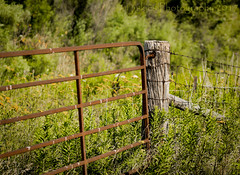 At The Gate (HFF) (13skies) Tags: gate fence fencefriday woodandwirefence wirefence post morning barrier private grass weeds green roads countryside country highway rural outside sunshine sunlight