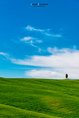 Lonely cypress (Chiara Salvadori Ph) Tags: tuscany valdorcia sanquiricodorcia travelphotography italy toscana agriculture beautiful cipress colors country farmland field grass green hill landscape light lonely nature outdoors places premium scenery siena sky spring sun tourism travel traveling trip unesco wine