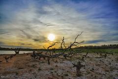 Arbol caído frente a la puesta de sol... (Peideluo) Tags: pantano spain paisaje atardecer sun sunrise tree cielo árbol elitegalleryaoi bestcapturesaoi aoi