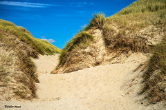 Les dunes (didier95) Tags: dune fortmahon somme baiedesomme picardie hautsdefrance sable bleu jaune paysage vert
