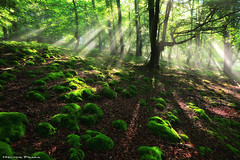 Be the light (Hector Prada) Tags: bosque niebla bruma sol luz magia rocas musgo mistico forest fog mist sun ligh magic rocks moss mystic moment spring