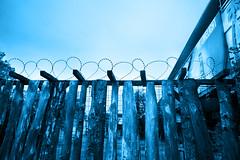 Wired hearts. From the limelight into the blues. (Gudzwi) Tags: wired stacheldraht wiredfence blue fence fencefriday fencedfriday fencephotography zaun drahtzaun draht holz holzzaun prora ostsee balticsea rügen herz drahtherz wiredhearts lattenzaun paling smileonsaturday bluetiful wirehearts barbedwirefence monochrom hff