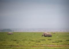 DSC_0079 (stacyjohnmack) Tags: africa kenya amboseli amboselinationalpark amboselli elephant safari