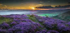 Purple Sunset (ANG Imagery) Tags: warmth lowlight derbyshire sun summer higgortor panorama sunset purple peakdistrict heather