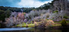 Winter beauty (dmunro100) Tags: winter mountlofty botanical gardens tree lake adelaide adelaidehills southaustralia peaceful serene cold calm canoneos80d canonefs1755mmf28isusm