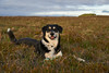 2july_Venus-Patterson-Sunset_006 (Stefán H. Kristinsson) Tags: venus dog sunset reykjanes iceland nikond800 tamron2875mm