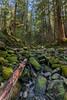 Mossy Rocky Stream (MyKeyC) Tags: solducfalls oregonwashinigton olympicnationalpark washington tina washingtonoregon stream mossy rocks moss rob forrest cindy