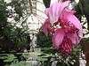 Wedding photos in progress (cbcastro) Tags: weddingcouple lilypond flowers sanfrancisco goldengatepark conservatoryofflowers