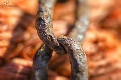 Link (Gavmonster) Tags: nikon nikond7000 d7000 gswphotography macro micro 105mm chain link rust metal orange rope closeup detail depthoffield dof shallow macromondays monday