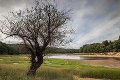Still water (Thos A.) Tags: tree lake grass longexposure water trees natur landscape morvan bourgogne burgundy arbre arbres eau lac nd eos canon samyang