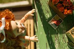 Heather (kinmegami) Tags: kelly mattel doll miniatureflowers miniature marigold roombox diorama obitsu 11 hybrid