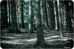 DSC_3650 (Olga Kapushtenska) Tags: wood tree bridge putila chernivtsi nature mountains water pine christmas river bukovina путила буковина карпаты горы лес сосны река природа olga k