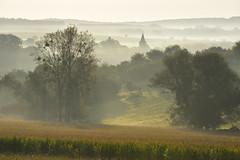 Ambiance de matin brumeux (Excalibur67) Tags: nikon d750 sigma 70200f28apoexdgoshsm paysage landscape brume mist nature arbres trees campagne alsace