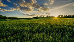 Fields of plenty (SpectrumLight) Tags: field nature natural landscape countryside rural sun sunset sunstar sonya7ii fe1635mmf4zaoss sonyilce7m2 sony clouds evening crops wheat green cloud kent england southeastengland ff wideangle