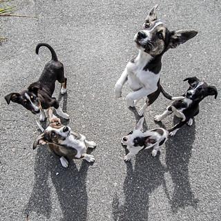 Feral Dogs - Chernobyl