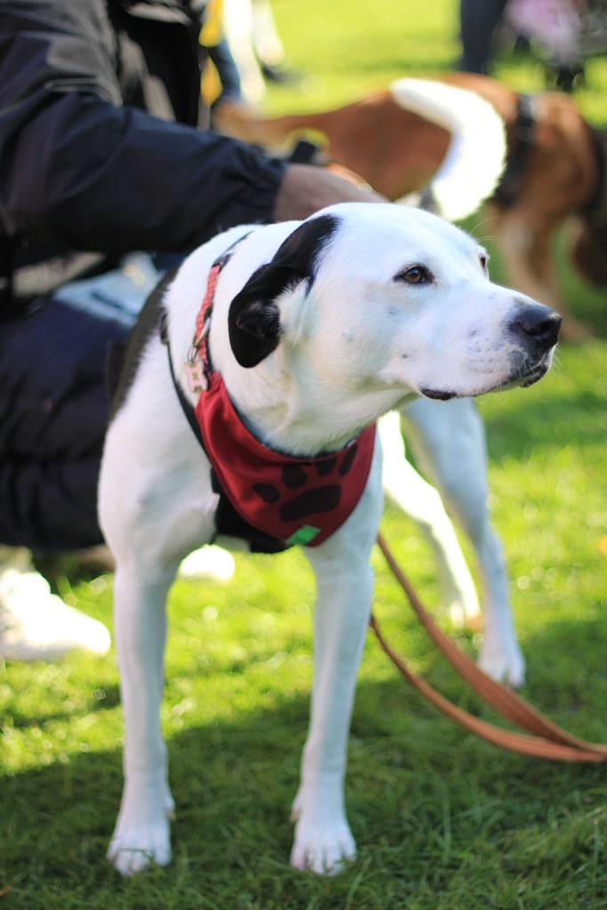 Dogs Dublin Adopt