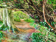 ThePrettyWayDownTheHill - Copy (iankellybn26dj) Tags: england sussex stanmer brighton woods trees summer photo landscape