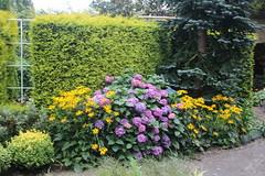 036A3539 (zet11) Tags: ogrody tematyczne hortulus dobrzyca garden plant flower