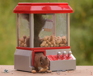 squirrel climbs out a Gumball Machine