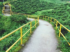 100 Shades Of Yellow Railing Staircase Steps The Way Forward Steps And Staircases Green Color Day Nature No People Stairs Tranquility Outdoors Plant Beauty In Nature Tree Footbridge Hand Rail PhotoNepal Ilam (bmaharjan) Tags: 100shadesofyellow railing staircase steps thewayforward stepsandstaircases greencolor day nature nopeople stairs tranquility outdoors plant beautyinnature tree footbridge handrail photonepal ilam