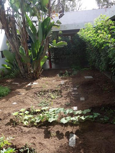 Le jardin mis à disposition pour les élèves, chacun peut venir y cultiver ses plantes