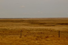 Grasslands on east side of Alberta (daveynin) Tags: plains grasslands fence alberta canada