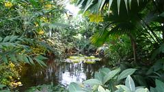 Le Havre - Les jardins suspendus (jeanlouisallix) Tags: le havre haute normandie saint adresse fort de jardin parc park garden serre tropicale paysages nature plantes botanique randonnée