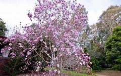 723 Yarramalong Road, Wyong Creek NSW