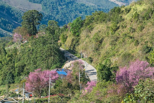 doi pha tang - thailande 5