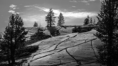 Olmsted Point (San Francisco Gal) Tags: olmstedpoint yosemitenationalpark granite stone rock tree conifer silhouette yosemite nationalpark shadow